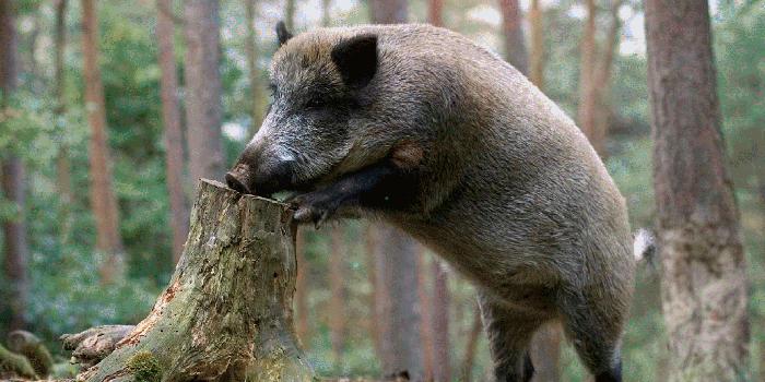 Охота в баварских лесах